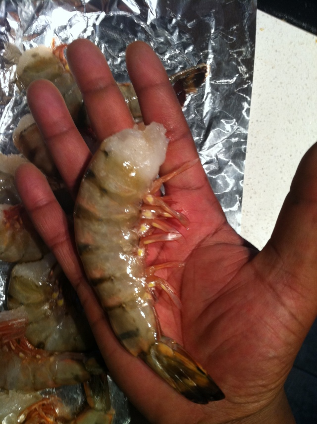 Colossal Shrimp!
